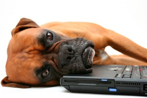 Dog laying on laptop - are you proud of your website